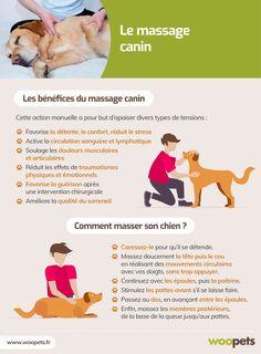 Le massage canin : bienfaits et conseils