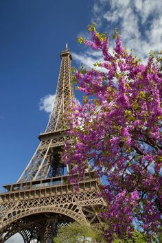 Pink Tree by the Eifel Tower Canvas Art - Brian Jannsen DanitaDelimont x Paris In Spring, Pink Trees, Belle Villa, Tour Eiffel, Architecture, Purple Flowers, Find Art, Framed Artwork, Mother Nature