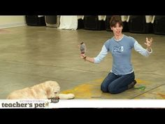 Teach a Dog to 'Take It' and 'Drop It' | Teacher's Pet With Victoria Stilwell - YouTube