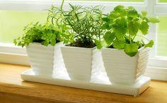 Há muito tempo as plantas são escolhidas para decorar espaços, sejam de umacasa, do escritório, de grandes centros de negócios, dentre outros, já que além de darem um toque mais fresco e natural a esses espaços também acredita-se que melhoram o fluxo de energia positiva evitando as energias negativas. Conformeos
