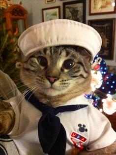 Sailor Kitteh says Ahoy!