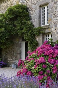 French garden with hydrangea and lavender.
