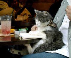 Cat Reading A Book | cat+reading+a+book.jpg