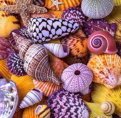Shells Photograph - Ocean treasures by Garry Gay Stone Wallpaper, Nature Wallpaper, Pinky Wallpaper, Deco Marine, Seashell Crafts, Shell Art, Colorful Wallpaper, Belle Photo, Cute Wallpapers