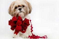#xmas #christmas #bozenarodzenie #swieta #zwierzeta #animals #cute