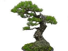 Bonsai! | Flickr - Photo Sharing!