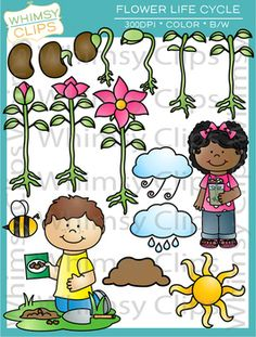 The flower life cycle clip art set contains 32 image files, which includes 16 color images and 16 black & white images in png and jpg. All images are 300dpi for better scaling and printing. $