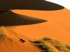 20 завораживающих фотографий пустыни Намиб