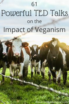 61 Powerful TED Talks on the Impact of Veganism
