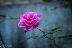"""""""Deixe a vida fazer com você, o quê a primavera faz com as flores."""" @vicky_photos_infantis https://www.facebook.com/vickyphotosinfantis http://websta.me/n/vicky_photos_infantis https://www.pinterest.com/vickydfay https://www.flickr.com/vickyphotosinfantis"""