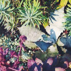 Euphorbia, Agave, Sedum / Sep.2015