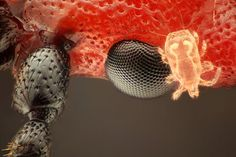 Microscopic photos of insects will make you squirm » Lost At E Minor: For creative people