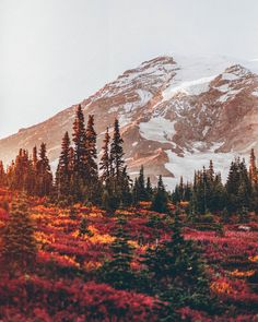 Femme.Cafe : fall colors Mt. Ranier