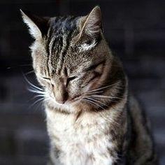 educate his cat understand his behaviorist cat Animals And Pets, Cute Animals, Pet Corner, Cat Cave, Photo Chat, Beautiful Cats, Dressage, Animal Kingdom, Your Pet