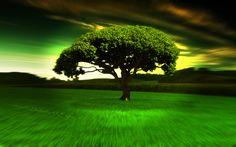 hypno_tree_2_hd_widescreen_wallpapers_1440x900.jpeg (1440×900)
