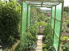 tomatenhaus-gartentomatenhaeuschen.jpg