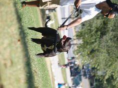 #summer #montreal #dog #pitbull