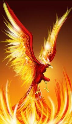 Phoenix rising (no link)