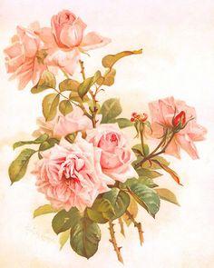 Paul de Longpre ~ light peachy-pink roses