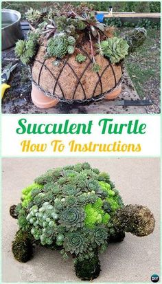 Succulents are easiest plants to grow indoors and look great, and if you're in need of some refreshing display ideas using succulents. Here's the post!