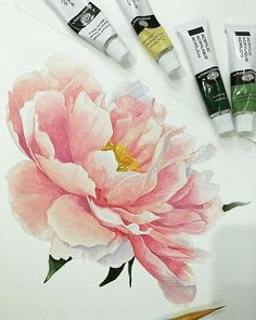 Super tattoo watercolor peony pink flowers ideas The Effective Pictures We Offer You About tatto Peony Painting, Acrylic Painting Flowers, Watercolor Flowers, Watercolor Paintings, Tattoo Watercolor, Watercolor Pencils, Watercolor Techniques, Watercolour, Art Floral
