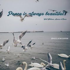 Peace is always beautiful!
