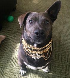 Ate the leprechaun. Took his Gold. They call me Mr. Mor-T. Happy Late St. Patrick's Day!   #ipitythefool --- #cutie #corgi #corgidor #corgimix #corgisofinstagram #doglife #dogoftheday #dogsandpals #nugget #vsco #vscocam #vscocamrussia #LosAngeles  #talesofalab #topdogphoto #rescuedismyfavoritebreed #adoptdontshop #puppiesofinstagram #dogsofinstagram #feature_do2  #rescuedog #worldofcutepets #cute #dailybarker #petsofinstagram #petscorner #petstagram #puppy #sunday by morty_loves_you