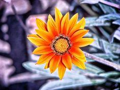 """""""Rivalizando con el sol"""". Foto tomada por mí :)"""