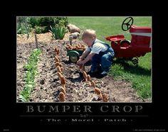 Fresh Morel Mushrooms Motivational Poster Art Print 11x14 Farming Garden  MVP163