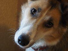 October is Adopt a Shelter Dog! #PetAdoption