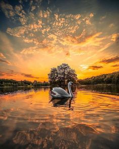 """1001KARE FOTOĞRAF posted on Instagram: """"🦢 Swan 📸 = @foroureternalsouls"""" • See all of @1001karefotograf's photos and videos on their profile. Germany Photography, Sunset Photography, Canon Photography, Mobile Photography, Wildlife Photography, Indian Photography, Photography Photos, Lifestyle Photography, Amazing Sunsets"""
