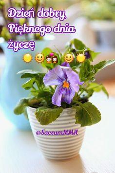 Good Morning, Planter Pots, Humor, Pictures, Polish, Buen Dia, Bonjour, Humour, Funny Photos