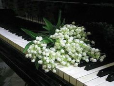 Lily of the valley flowers lying on top of piano keys My Flower, White Flowers, Flower Power, Beautiful Flowers, Lilies Flowers, White Peonies, Valley Flowers, Raindrops And Roses, Affinity Photo