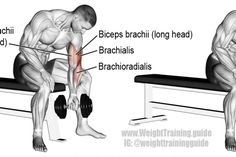 Dumbbell concentration curl exercise