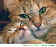 justcuteanimals.com wp-content uploads 2013 03 cute-animals-kitten-mummy-cat-sweet-pictures-pics-images.jpg