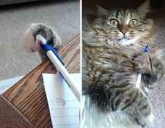 Cats can almost steal anything they want – even your pen!