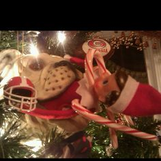 Our Elf (Clarence) landed in our UGA Christmas tree!