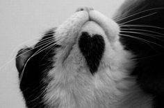Cat with heart (photo 37) on Chongas