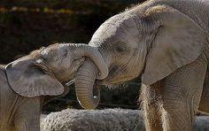 happy, smiling, baby elephant :)