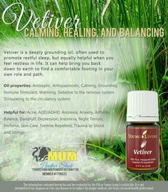 Vetiver essential oil is not a widely-known oil, even though its use dates back centuries. Vetiver Young Living, Young Living Oils, Vetiver Essential Oil, Pure Essential Oils, Aromatherapy, How Are You Feeling, Essentials, Healing, Herbs