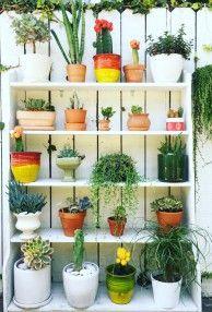 Bookcase Vertical Garden