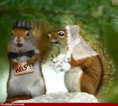 Squirrel Wedding -   Q.How do you catch a squirrel?  A. Climb into a tree and act like a nut.