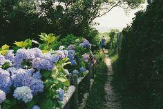 Path by riahhlynn