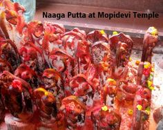 Naaga-Putta-at-Mopidevi-Temple