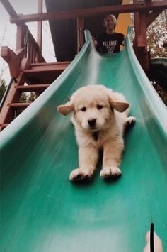 08e40249 187 Best A Dog's Life images in 2019 | Doggies, Fluffy animals, Cute ...