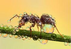 Insekten nach einem Regenschauer. Faszinierende Aufnahmen!