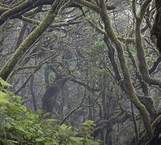 Perfect Laurel Forest Madeira - Bing images