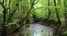 16. İğneada Longoz Ormanları Milli Parkı