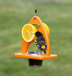 """Oriole Delight Feeder: The curvaceous design of this bird feeder may be called """"sexy,"""" but it's the bright orange color and tempting grape jelly that will attract orioles from far and near. Enjoy watching orioles and other fruit-loving birds eat from both sides of this feeder."""