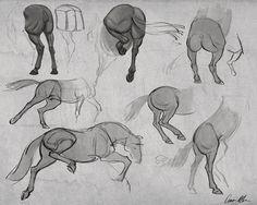 Anatomy drawing, animal anatomy, cartoon drawings, horse drawings, animal d Horse Drawings, Cartoon Drawings, Animal Drawings, Art Drawings, Drawing Animals, Doodle Drawing, Anatomy Drawing, Drawing Art, Horse Anatomy